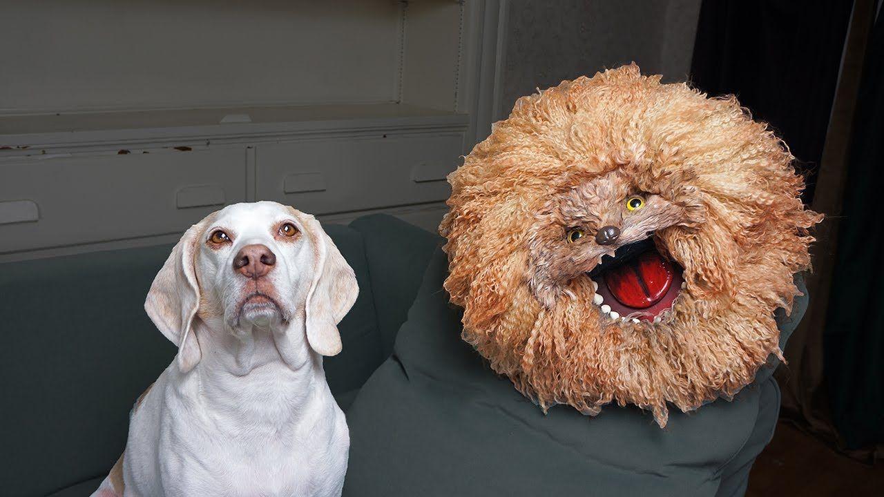 Dog Adopts Crazy Dog Named Bruce Funny Dogs Maymo Penny Potpie Rescue Crazy Dog Youtube Crazy Dog Dog Names Funny Dogs