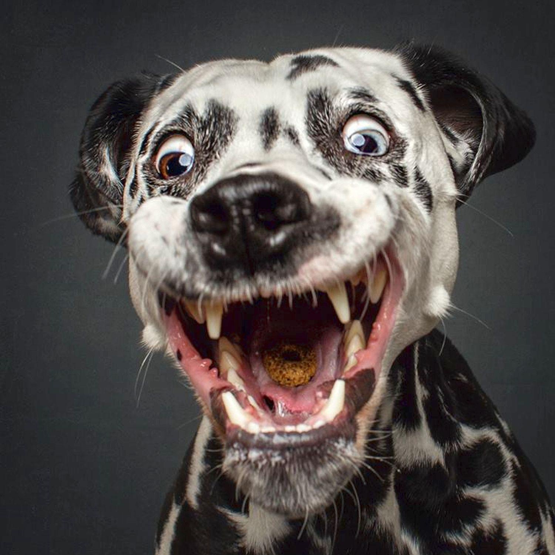11 20221353 147ccd 2752698a Jpg 1500 1500 Funny Dog Photos Dog Face Dog Expressions