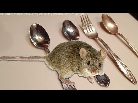 New How To Keep Mice Out Of Your House Or Apartment For Good Youtube Getting Rid Of Mice Pest Control Pests