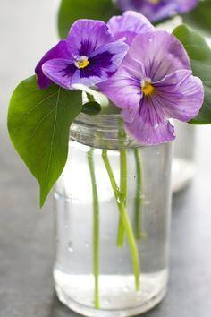 Violet Pansy Purple Flowers Small Flower Arrangements Beautiful Flowers