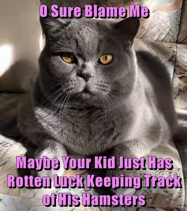 Cat Memes – 46 Pics