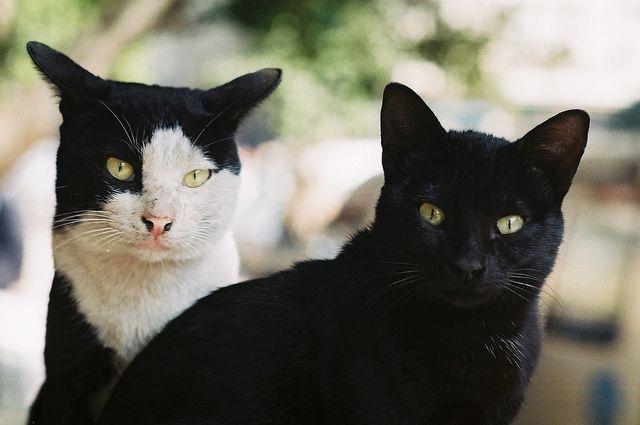 Cats in Cairo, via Flickr.