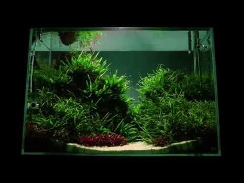 Superior U0027Altitudeu0027 Aquascape By James Findley   Nature Aquarium Step By Step  Tutorial | The