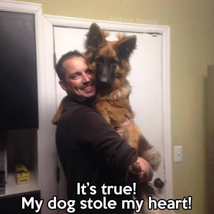 Pin By Cents Ably Creative Affordable On German Shepherds Rock