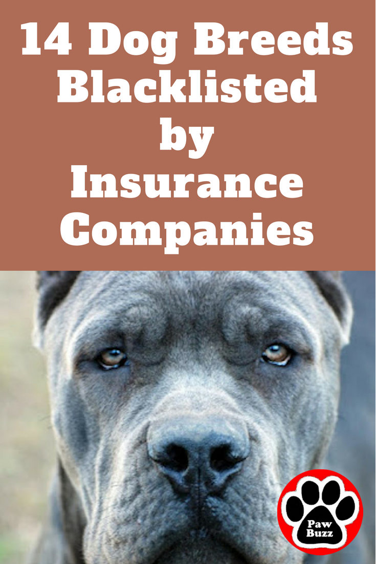 While Every Insurance Company Has Their Own Reasons For Choosing The Breeds They Blacklist Most Are B Aggressive Dog Breeds Dog Breeds Pet Insurance Reviews