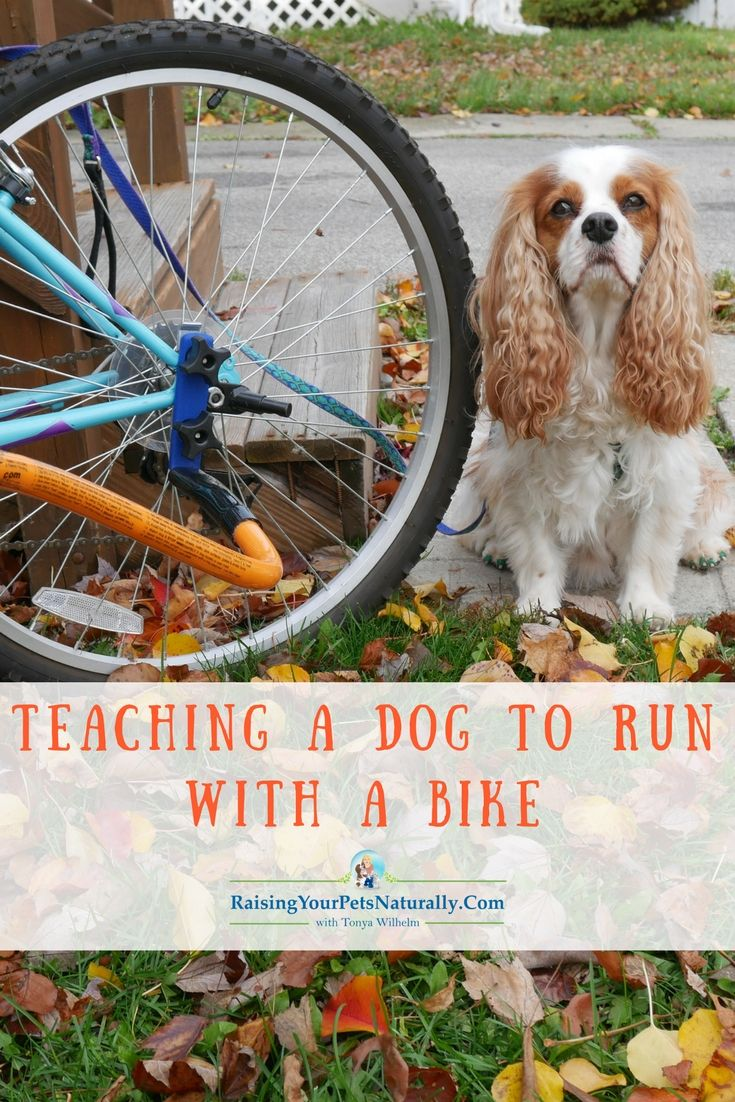 Outdoor Dog Activities How To Introduce Your Dog To Biking Safely