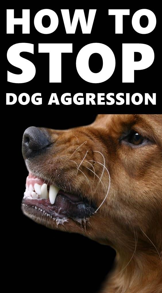 Understanding Each Type Of Aggression Will Help You Know How To