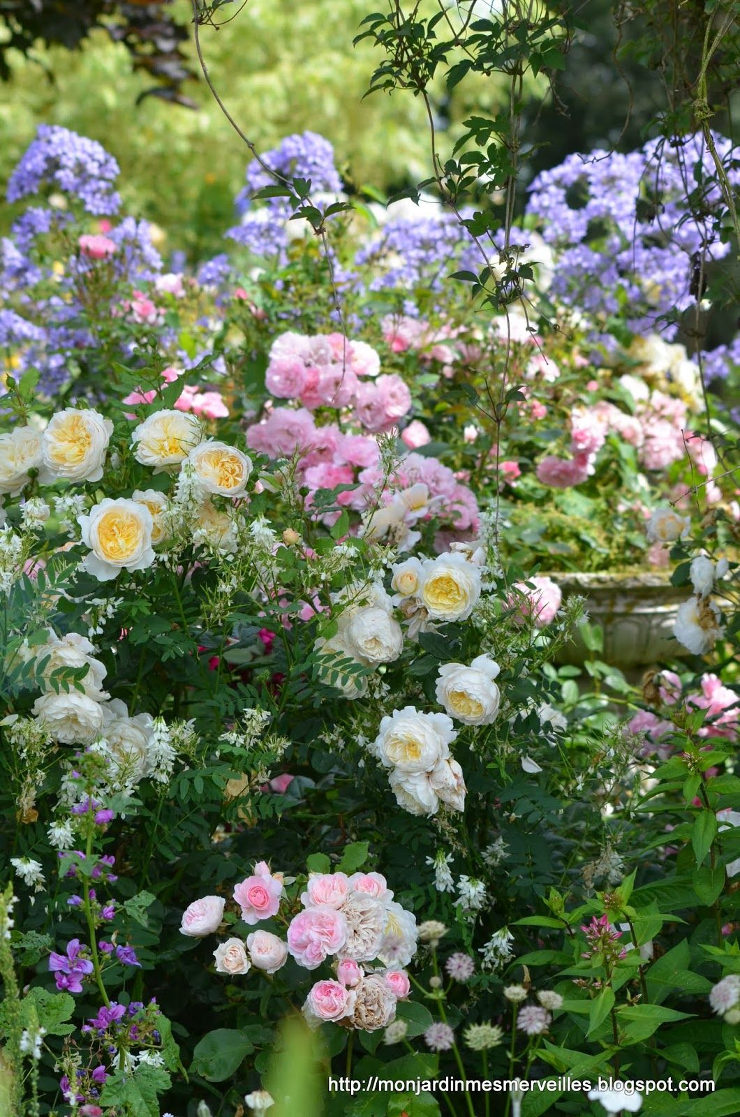 Roses In Garden: Lovely Pastel Combination Of Blue, Pink, Yellow. It's Hard