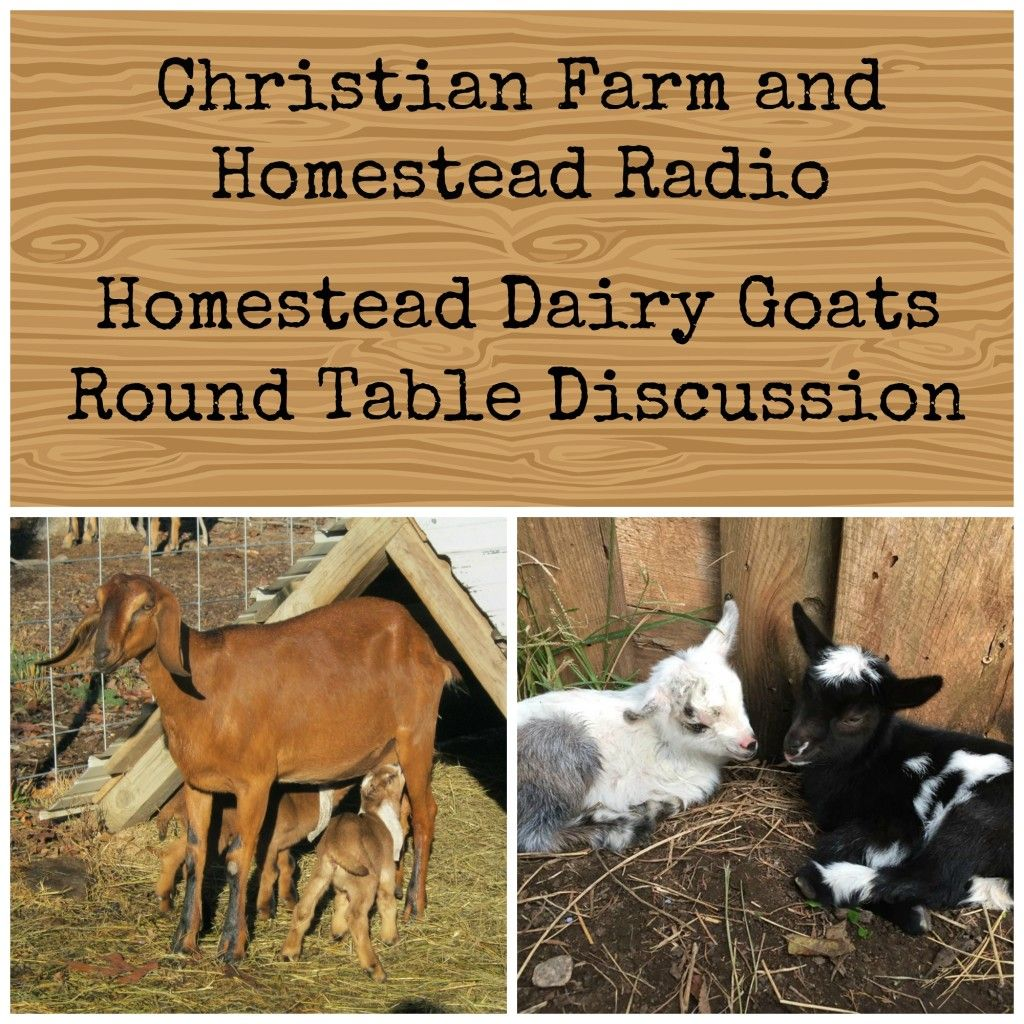 Homestead Dairy Goats (Podcast)  A Round Table Discussion