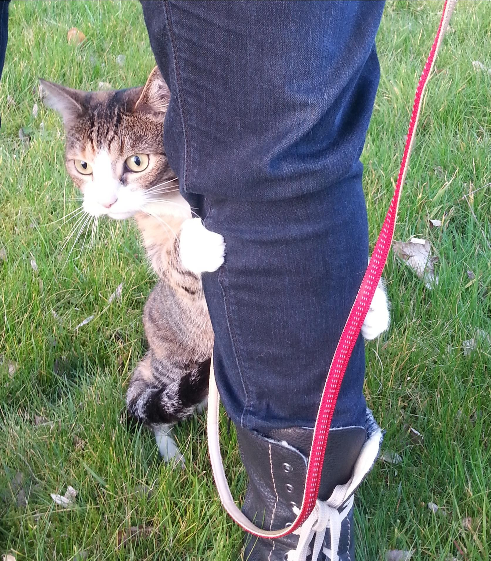 Getting Our Appartment Raised Cat Used To The Outside World Soooo Scary Cat Leash Funny Animals Animals