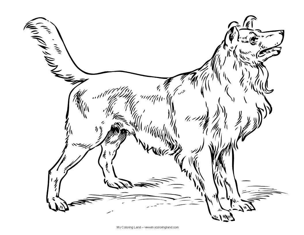 dogs clor page dog coloring pages - Dogs Coloring Pages