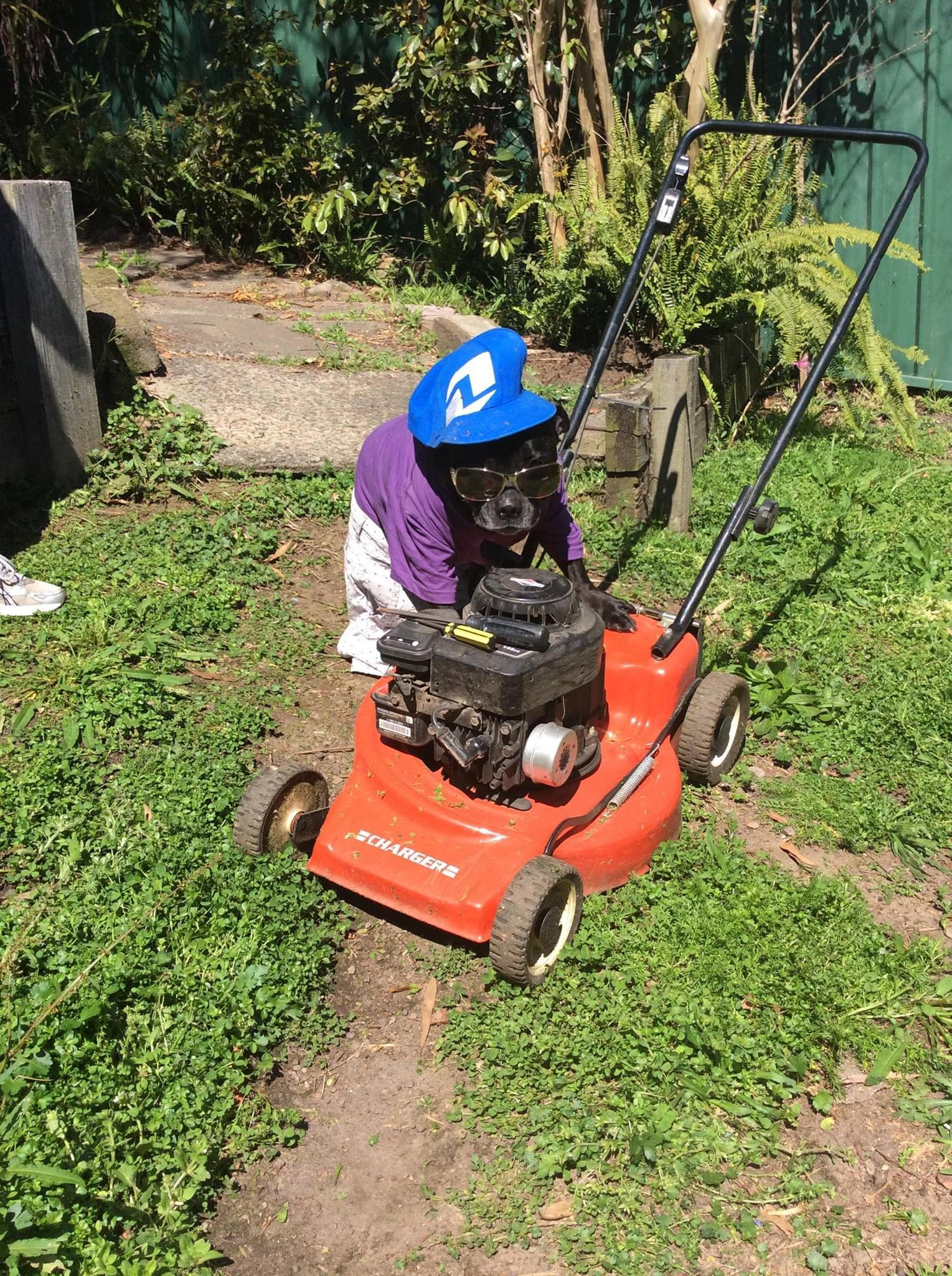Tough Job With All Of The Rain We Have Had Good Luck Rollie Lol Outdoor Power Equipment Lawn Mower Push Lawnmower