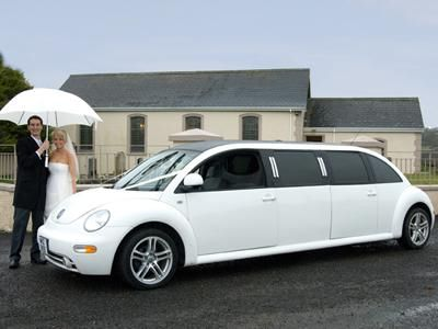 Stretched limo beetle