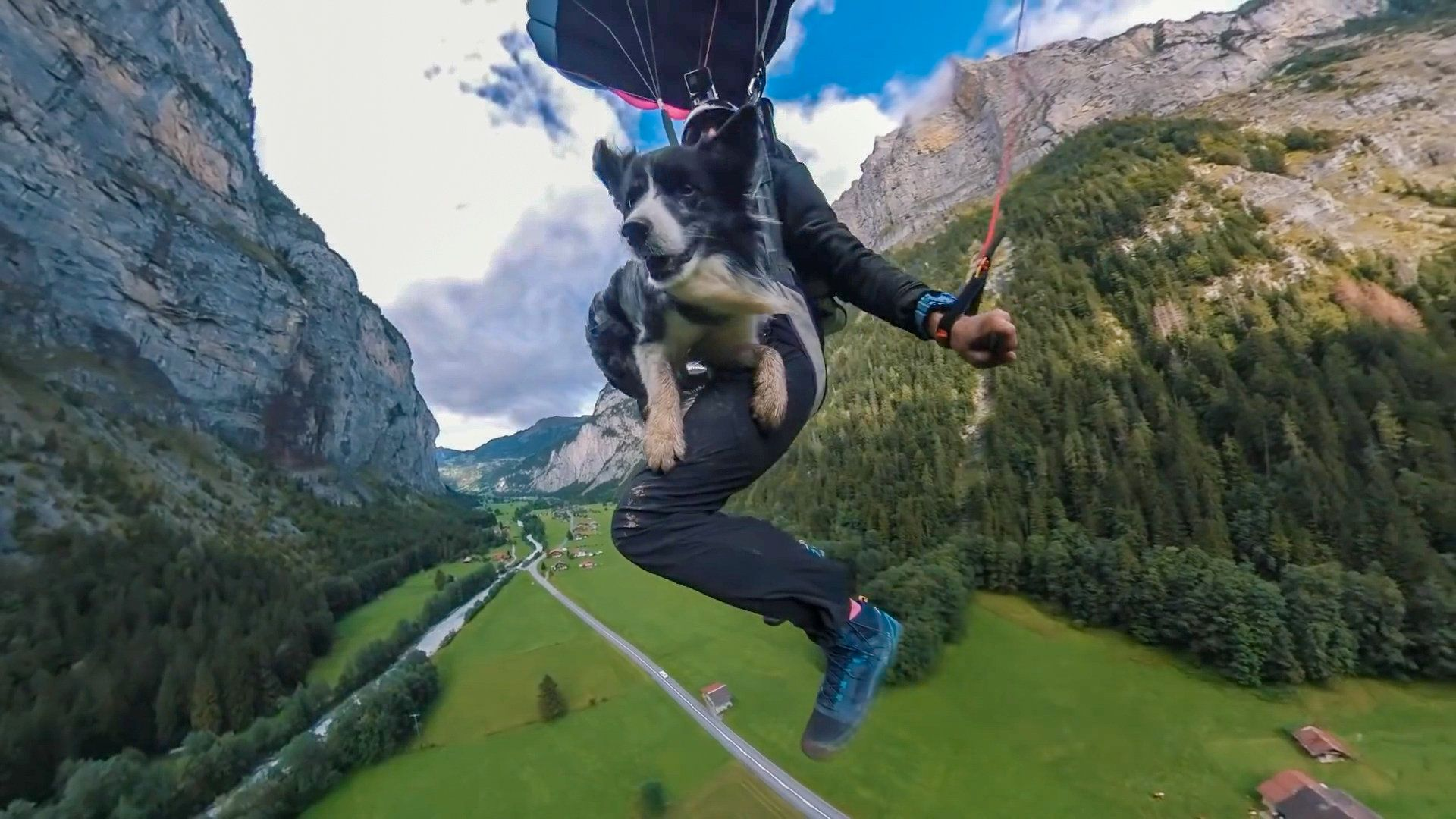 Dog leaps off 2,000foot cliff with owner, parachutes to