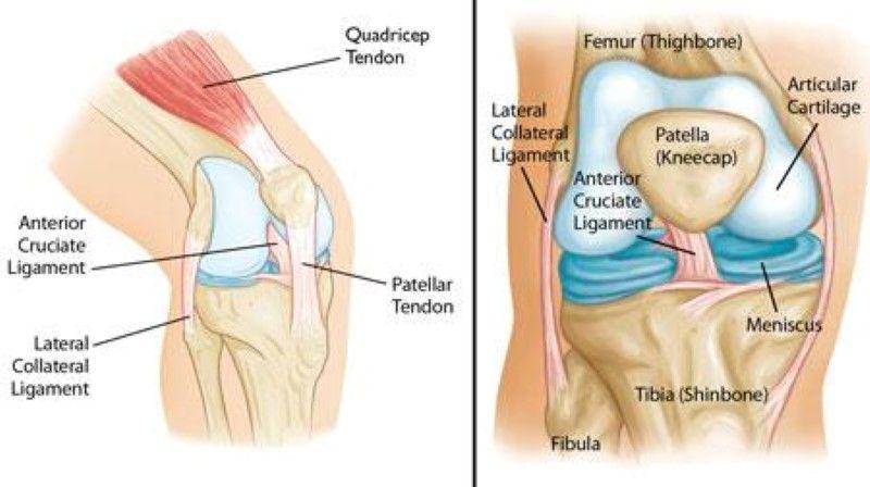 Patella Lateral Collateral Ligament Anterior Cruciate Ligament