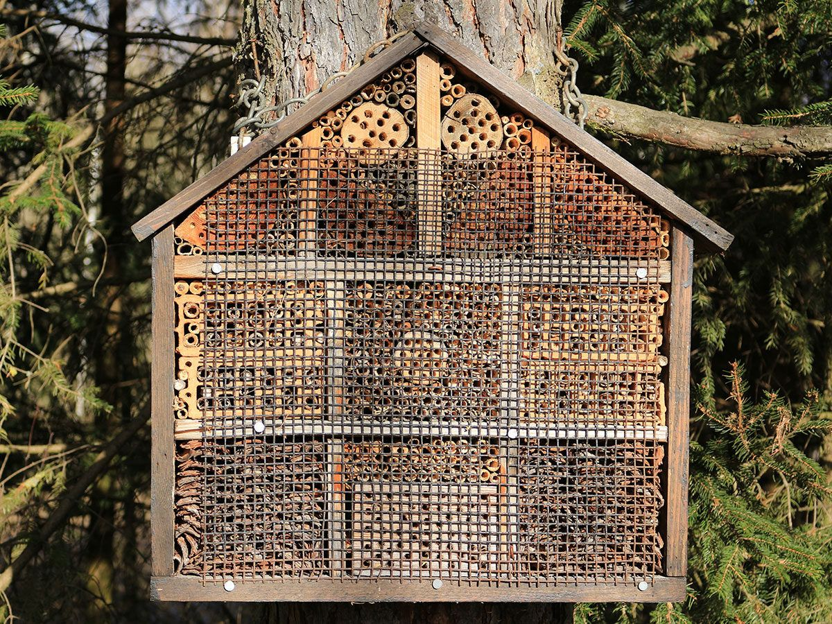 How to Build a Native Bee Hotel | Bees, Gardens and Bee house