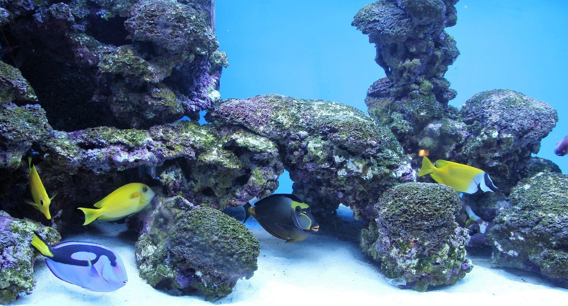 Acuario Peces Tropicales Corales Pecera Colorido 1701101029