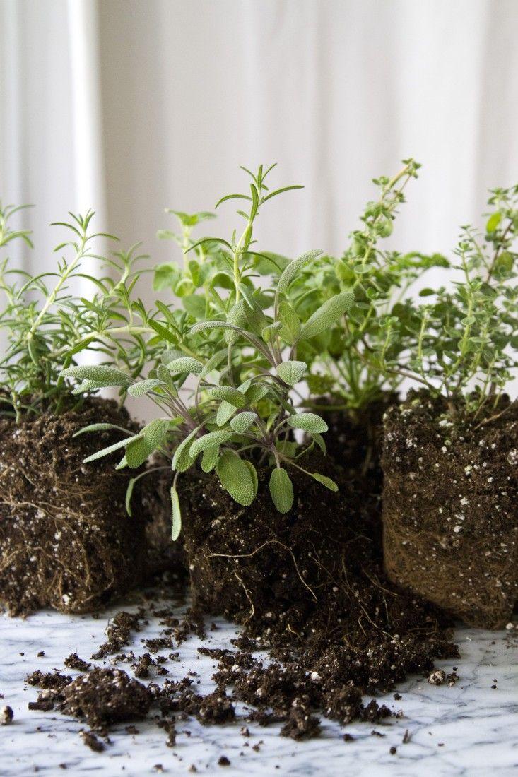 Small Space Diy Countertop Herb Garden Small Herb Gardens Herb
