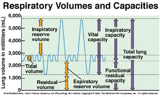 Image result for respiratory volumes diagram