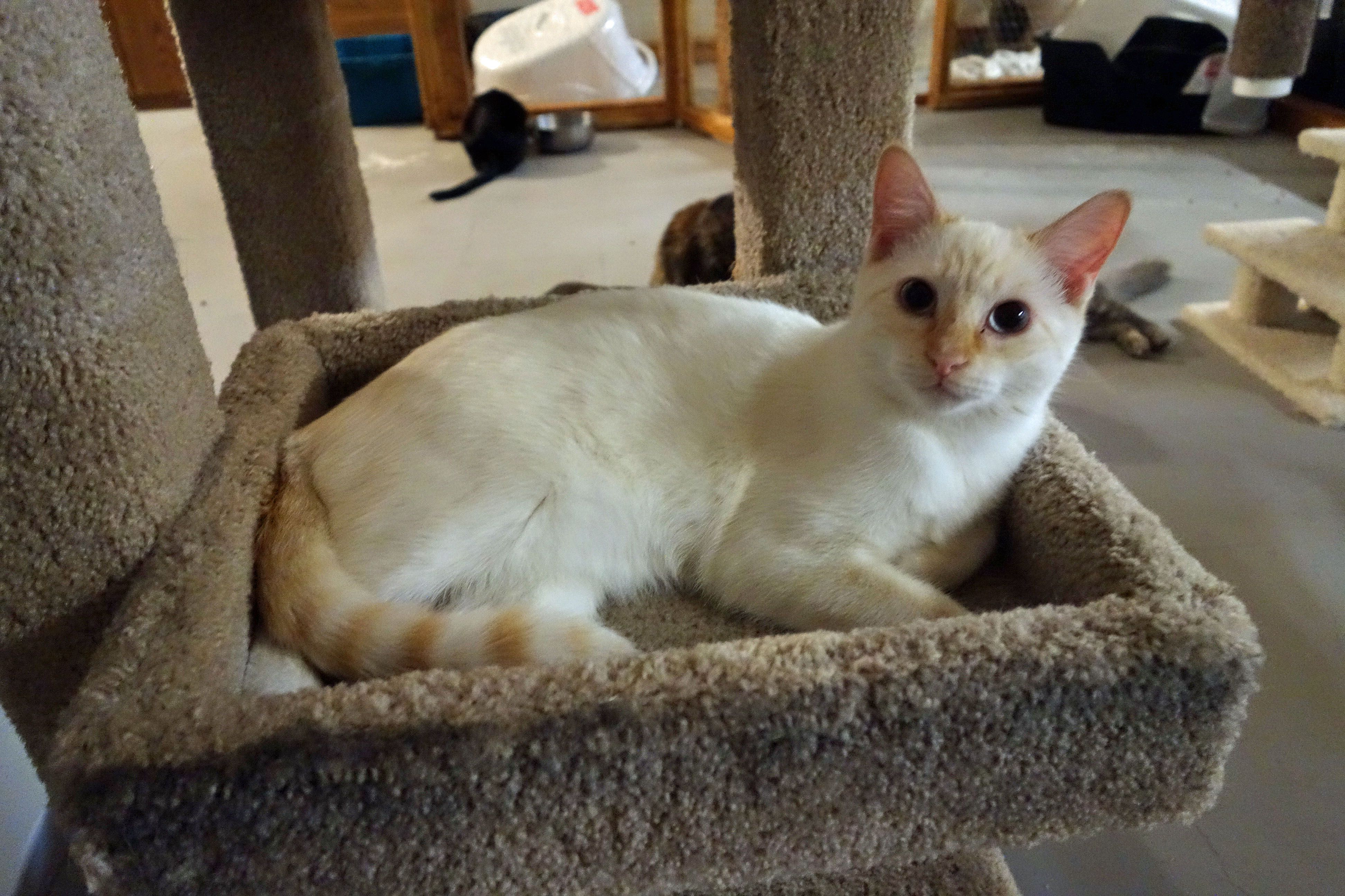 Adopt Me Pets Of The Week From Local Rescues And Shelters Pets Cute Cat Breeds Cute Animals