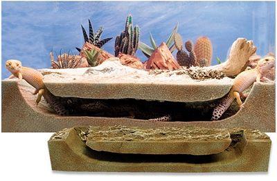 Leopard Gecko Vivarium Ideas Google Search Cool Reptile