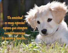Fotos De La Amistad Con Frases Perro Imagenes De Amistad Frases