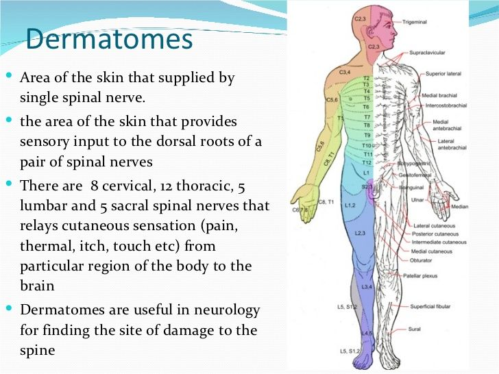 Image result for dermatomes and myotomes of upper limb ...