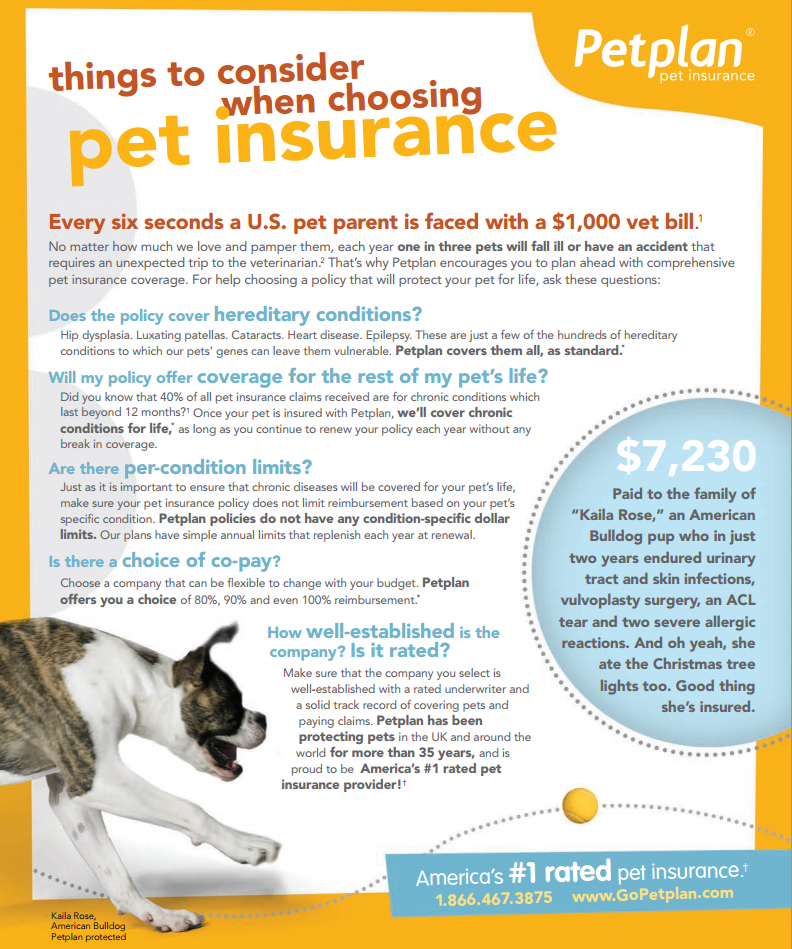5 Things To Consider When Purchasing Pet Insurance Pets Dog