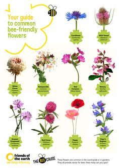 Poster Of Plants Good For Bees And Butterflies Uk Google Search Bee Friendly Flowers Bee Friendly Plants Bee Friendly Garden