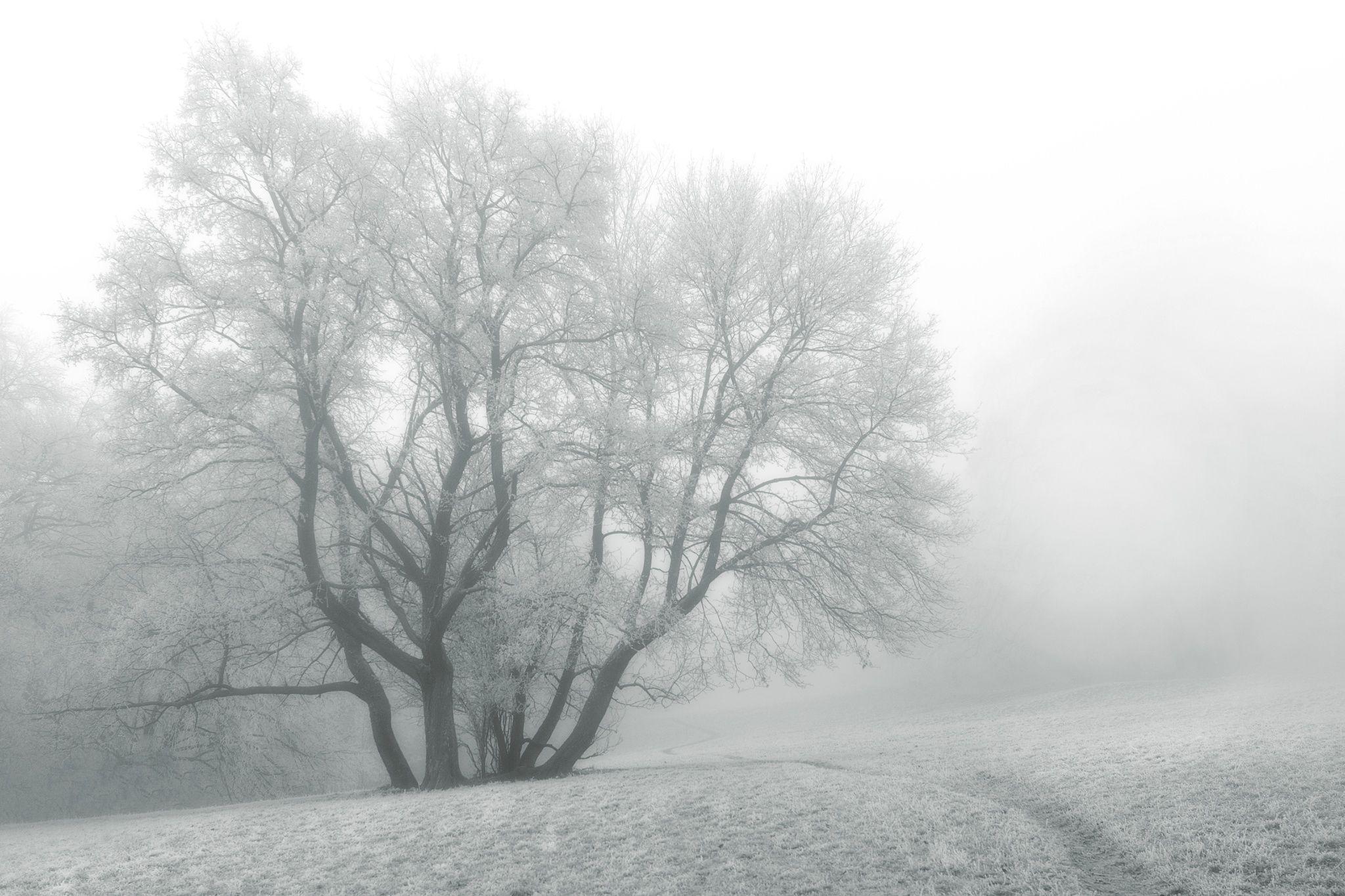 Frosty December by Csilla Zelko on 500px