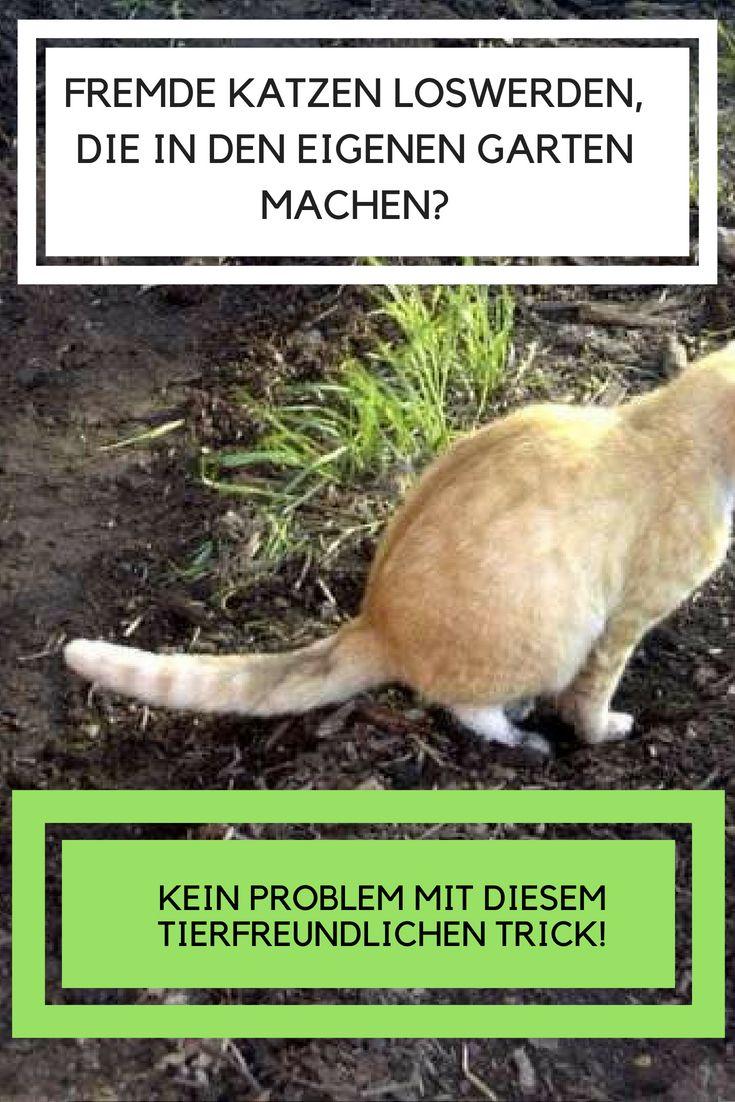 Katzen Loswerden Mit Nur Drei Naturlichen Zutaten Auch Wenn Wir Katzen Toll Und Niedlich Finden Dann Wissen Gartenbesit Garten Garten Pflanzen Haus Und Garten