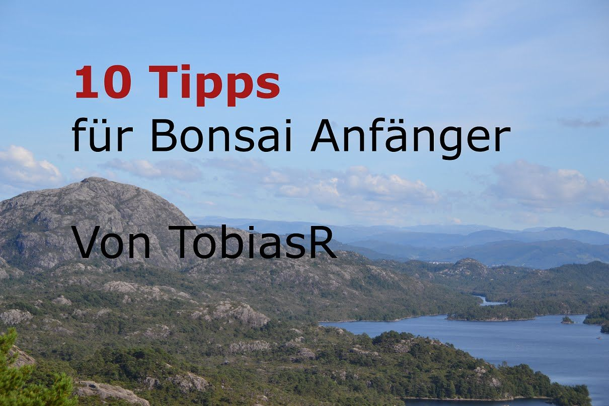 Bonsai Anfänger 10 bonsai tipps für anfänger [deutsch][hd] - youtube   bonsai