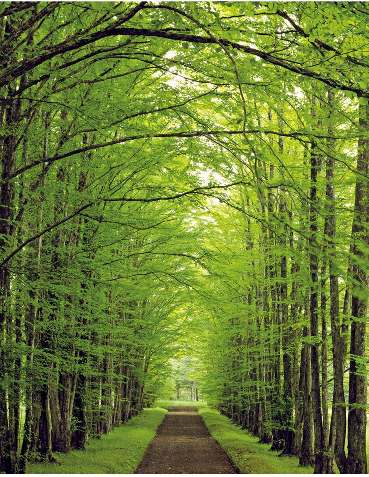 nature path natures pathway paths spring