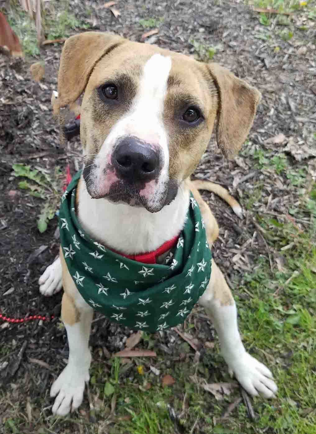 Adopt Cutty on Cute dog mixes, Animals, Dogs