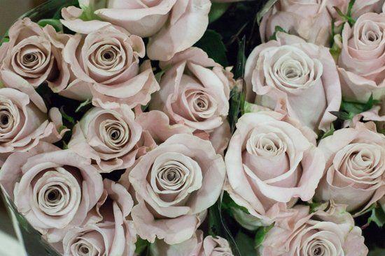 colour menta rose rosas color menta menta y nombres de flores. Black Bedroom Furniture Sets. Home Design Ideas