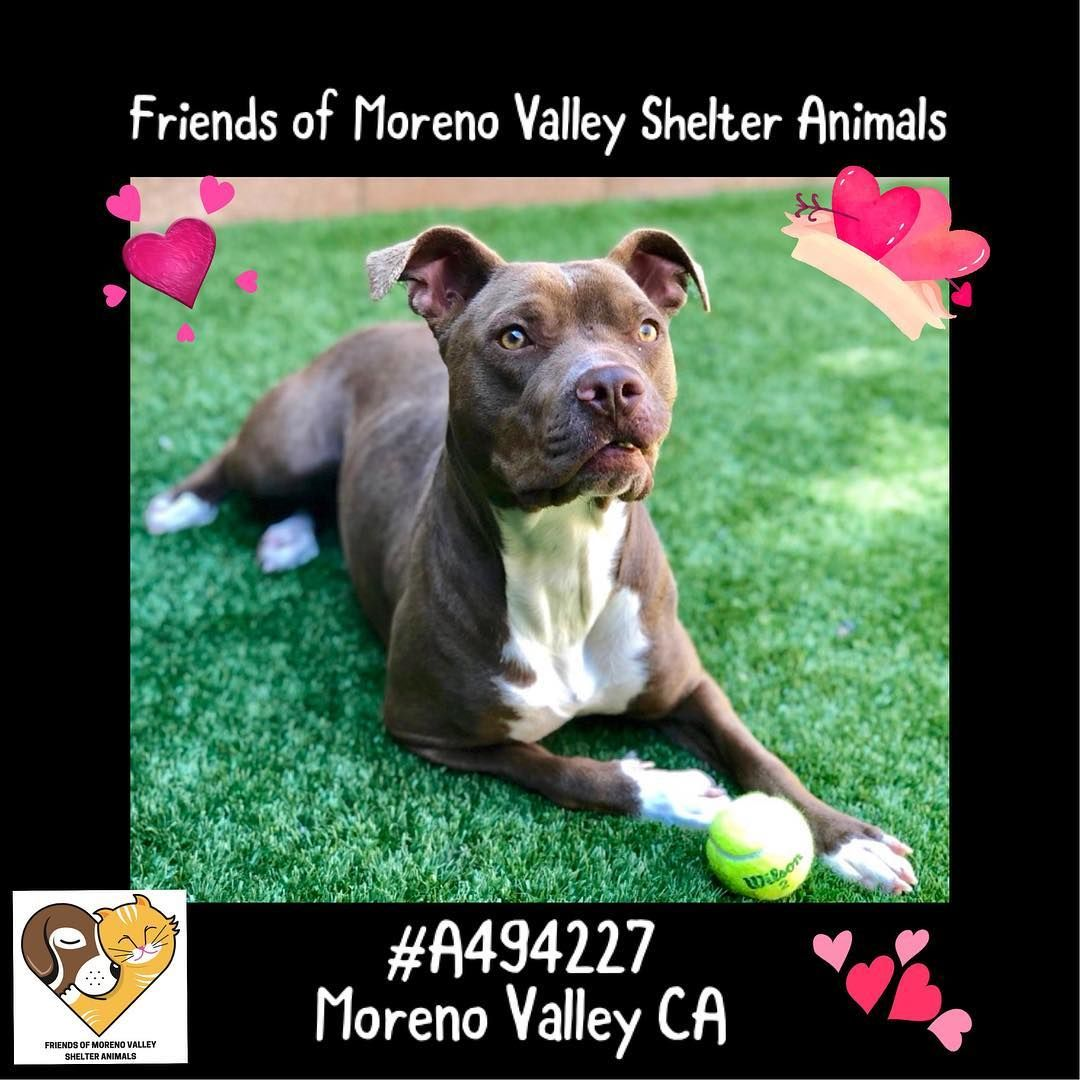 Moreno Valley Shelter Animals On Instagram Urgent Now