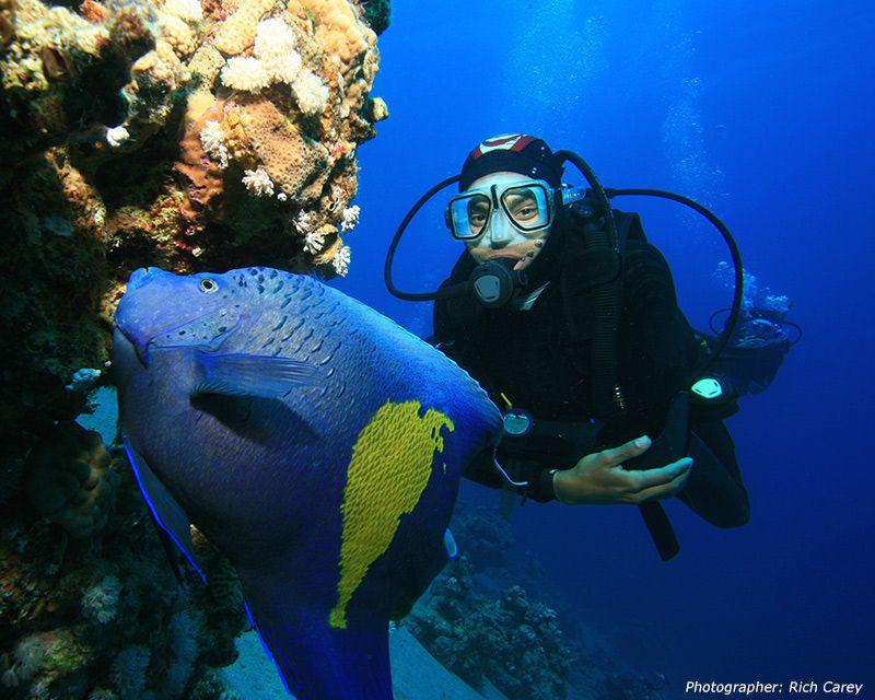 Arabian Angelfish Pomacanthus Maculosus And Scuba Diver Diving Scuba Diving Magazine Scuba