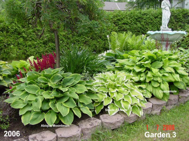 hosta gardening Hostas in a garden design Hosta Forum