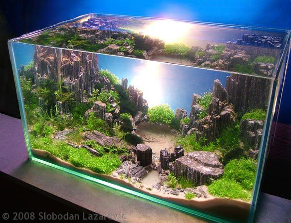 Looks Like Something From The Lost World Petz Aquarium
