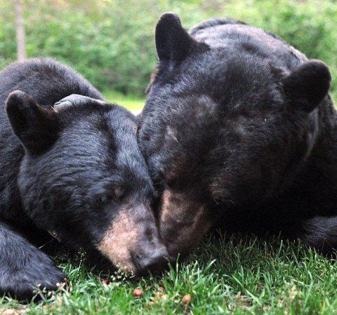 June Bear and Big Harry Bear (June's Boyfriend)