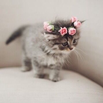 Kitty Flower Crown Cats Cute Animals Kittens Cutest Pretty Cats