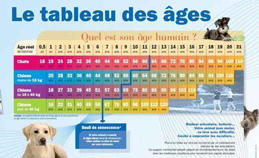 Timeline Photos Cabinet Veterinaire Ittelet Produits Pour Chien Age Chien Age Chat