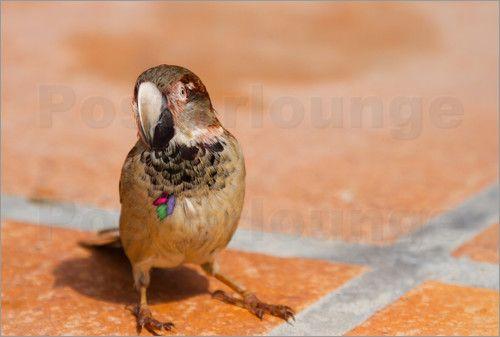 Ursula Di Chito - Papagatz - Tierkreuzung Spatz und Papagei