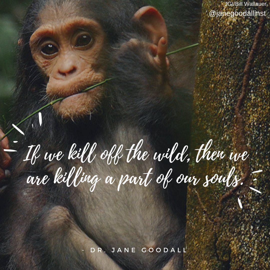 Dr. Jane Goodall & the Jane Goodall Institute on Twitter ...