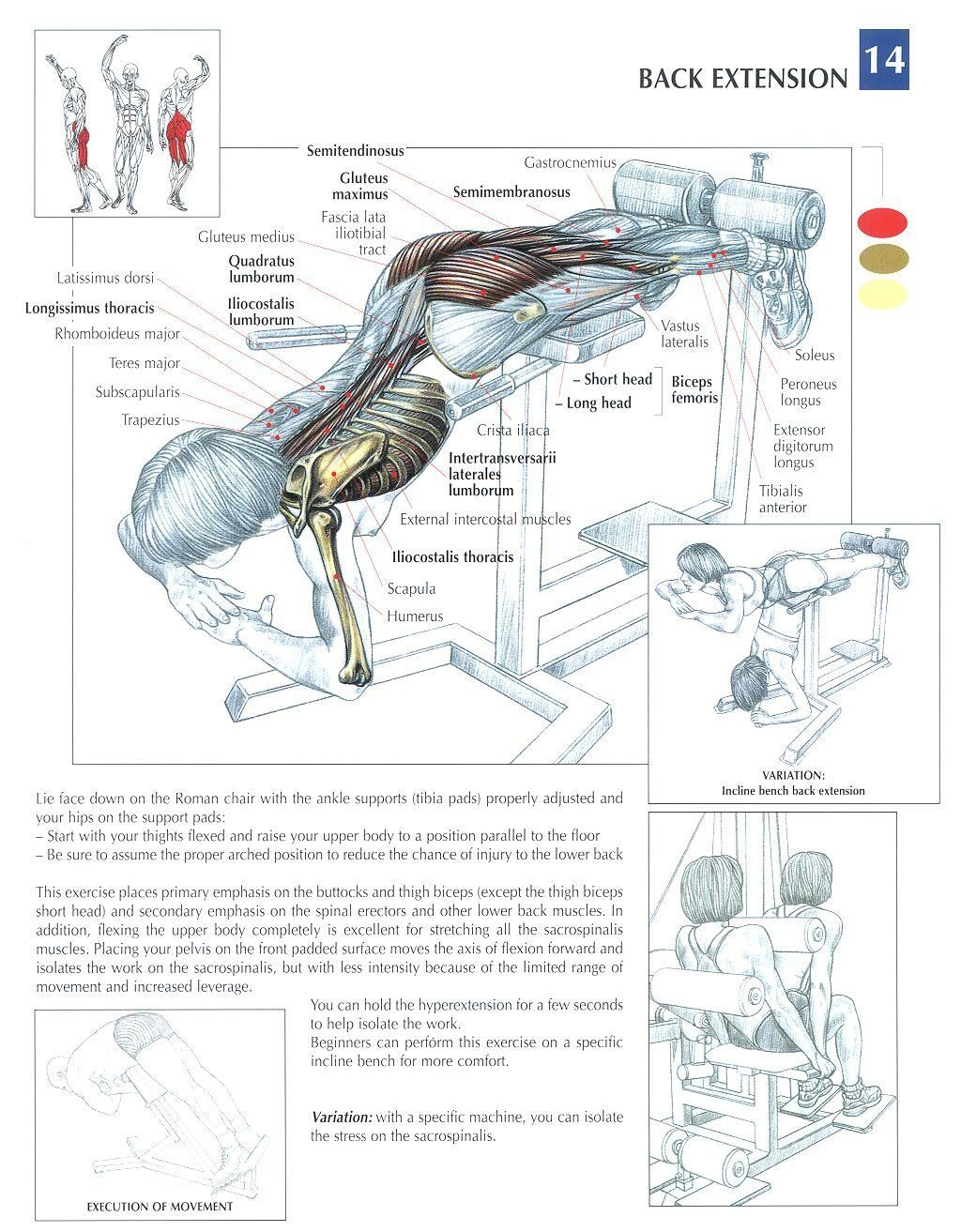 Back Extensions ♢ #health #fitness #exercises #diagrams #body ...