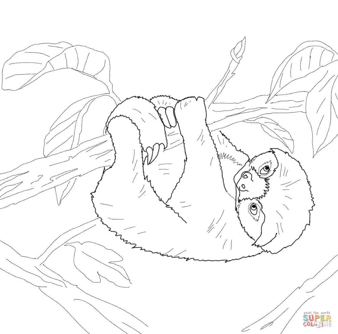Baby Sloth Coloring Page Free Printable Coloring Pages Coloring Pages Animal Coloring Pages Free Coloring Pages