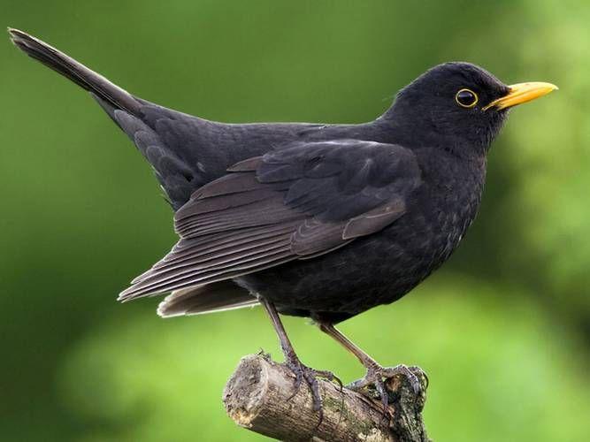 Amsel Drossel Fink Und Star Diese Vogel Treffen Sich Am