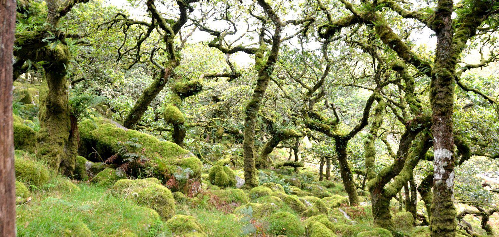 Dartmoor. Lee's Walking Adventures UK: Two Bridges, Wistman's Wood Short Walk