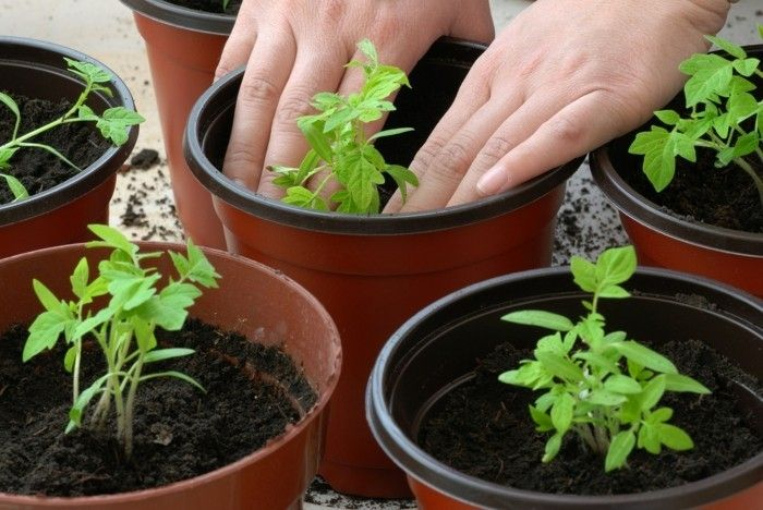 balkon bepflanzen und sich ber einen pr chtigen garten freuen balkonm bel balkonpflanzen. Black Bedroom Furniture Sets. Home Design Ideas