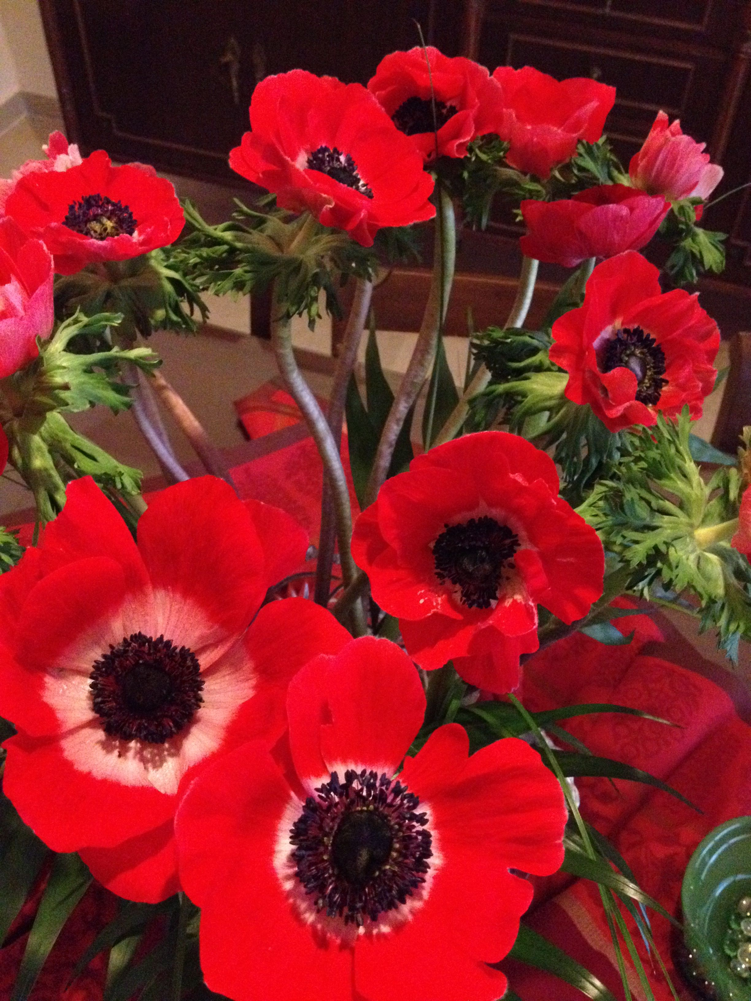 Gorgeous Red Anemones Red Flowers Bulb Flowers Anemone Flower